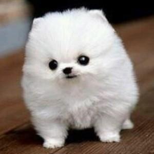 ソフトバンク ギガちゃん 犬種